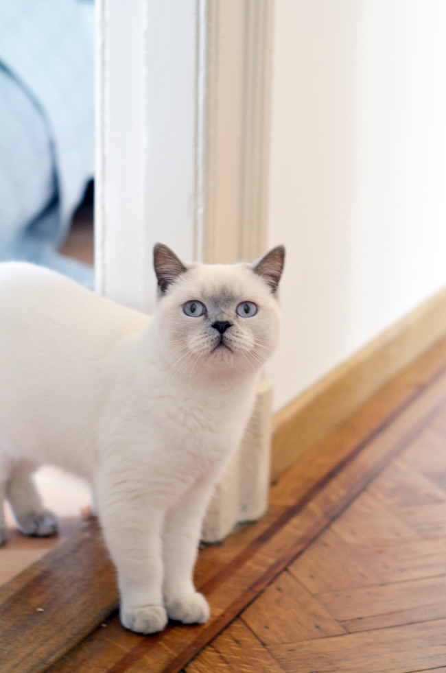 Young Creatives: Sofie Vertongen // Inside her home and studio // josie the white british shorthair - via noglitternoglory.com