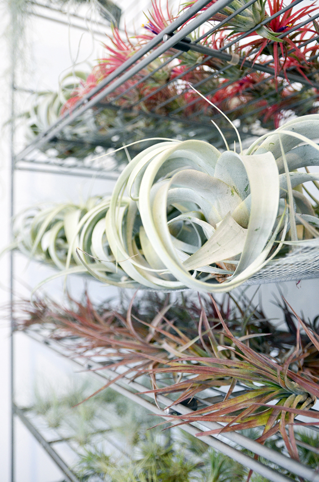Young Creatives: Sofie Vertongen // Inside her home and studio// Airplants - via noglitternoglory.com