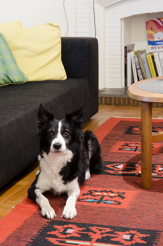 Nathalie and Michiel's Arty & Eclectic Apartment // Vanna the border collie